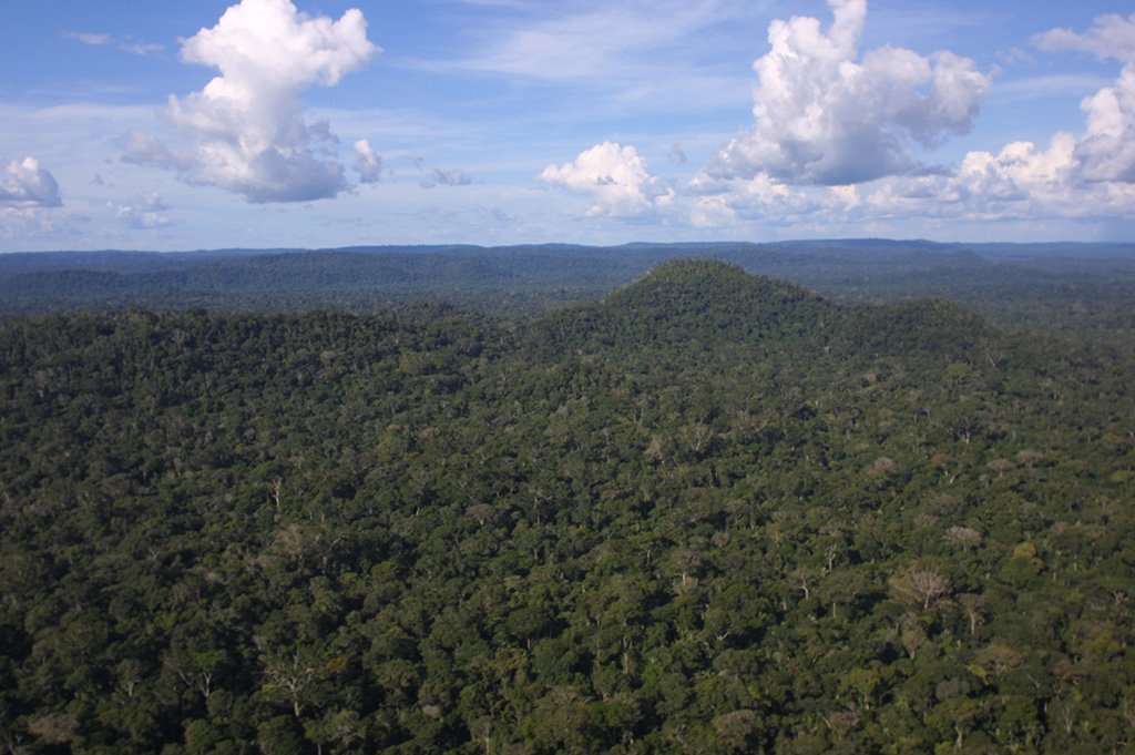 Brazilian Rain Forest After Selective Logging